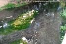 Mancha de óleo no Rio Itaúnas deixa moradores indignados em Barra de São Francisco